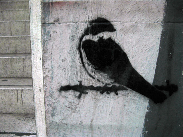 this is an image of a stencil that expresses: A magpie